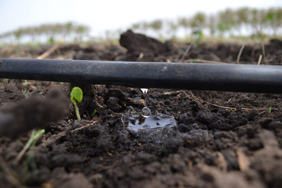 Drip Irrigation Dusun Bandar