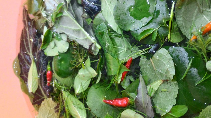 Penuanian Hasil Dusun Bandar 16 jenis Pucuk, Ulam & Herba untuk seisi keluarga
