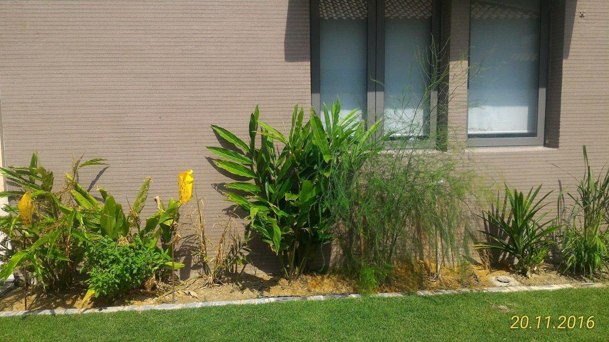 Pokok Herba dan Buah sekeliling rumah