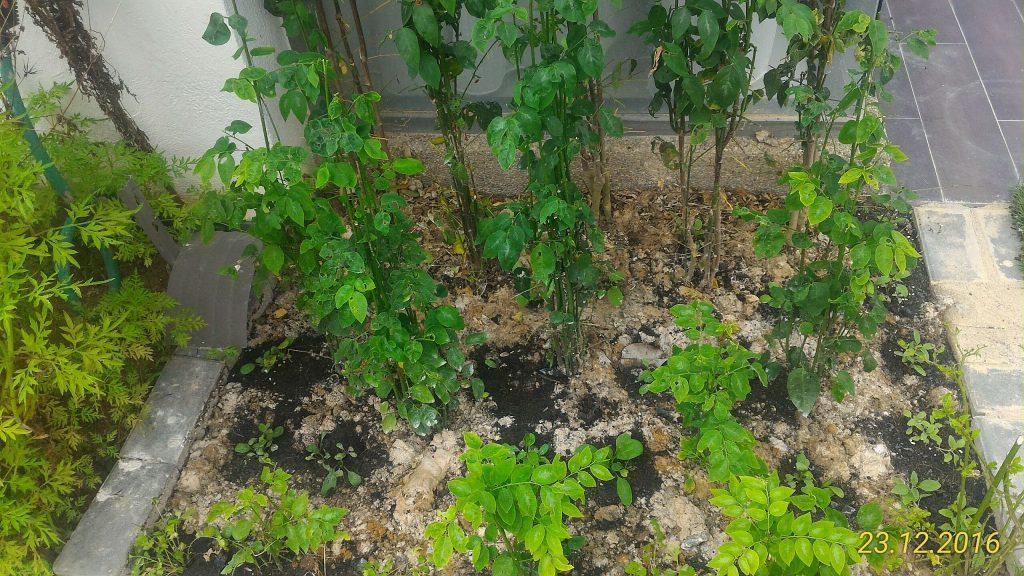 Companion Planting Berlapis Lapisan